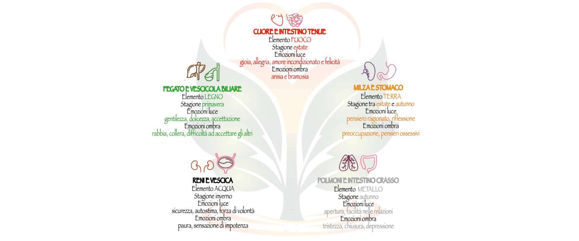 darshanatura-emozioni-organi-header